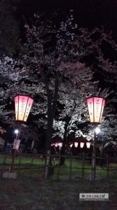 yosakura